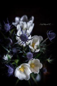 fiori-1-2